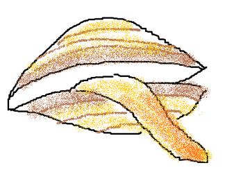 アオヤギ2.png