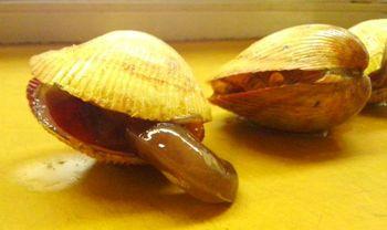 殻付き生トリ貝